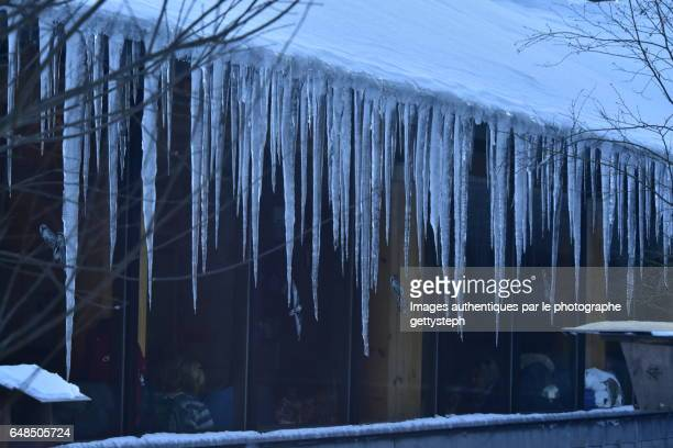 The majestic ice stalactites hanging on roof