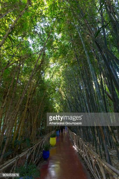 The Majorelle Garden on January 04 2018 in Marrakesh Morocco The Jardin Majorelle in Marrakech is one of the most visited sites in MoroccoThe...