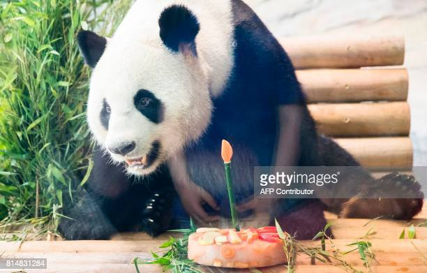 The male panda Jiao Qing is seen tucking into a birthday cake in its enclosure at the Berlin Zoo on July 15 2017 The impressive 110kilo male panda...