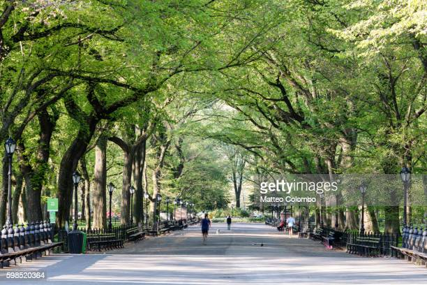 the mall in spring, central park, new york, usa - central park stock pictures, royalty-free photos & images
