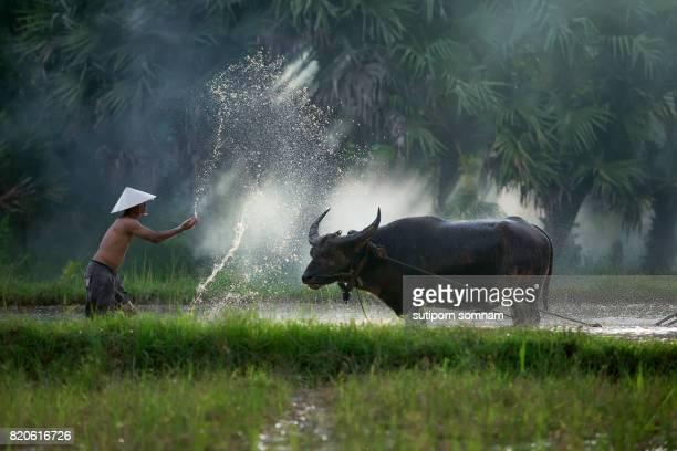 The man farmer bathing buffalo