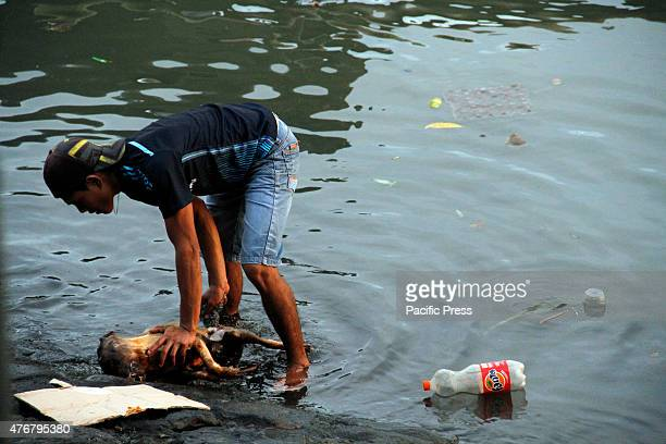The man is washing dog meat in a dirty river before it will be sold to the buyers in the traditional markets in Manado.