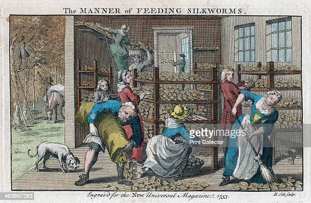 'The Manner of Feeding Silkworms', 1753. A silkworm farm, showing the interior of the rearing house or Magnangerie and the collection of mulberry...