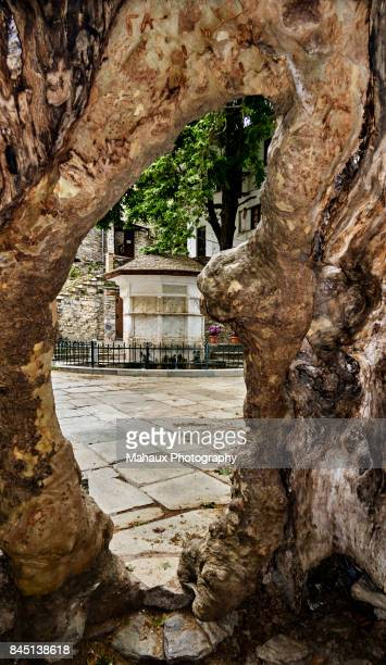 """the marble fountain with the """"immortal water"""" seen through the hollow old plane in makrinitsa - thessaly stock pictures, royalty-free photos & images"""