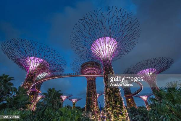 The Marina Bay Sands and the Supertrees at the Gardens By The Bay are illuminated at night in Singapore on March 27 2017