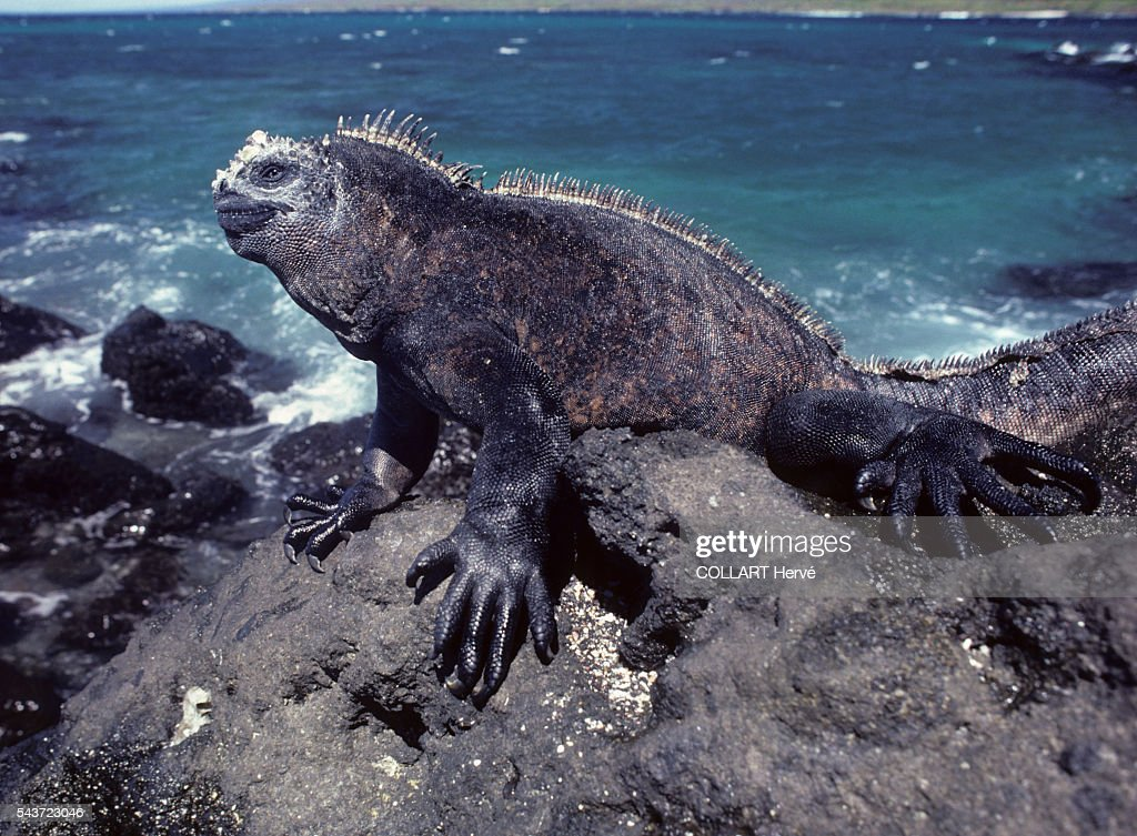 The Galapagos Islands : News Photo