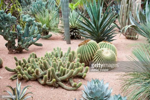 The Marjorelle Gardens in Marrakech, Morocco, North Africa.