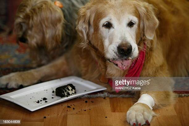 Worlds Best Mon Bon Chien Stock Pictures Photos And