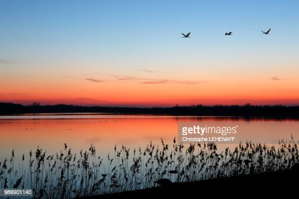 the marne. haute-marne. lake of der in winter. site of larzicourt. twilight with the top of lake. cranes ashed in the sky. - marne stock pictures, royalty-free photos & images