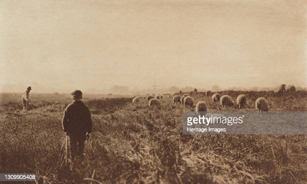 The Marshes in June, 1890-1891, printed 1893. Artist Dr Peter Henry Emerson. .