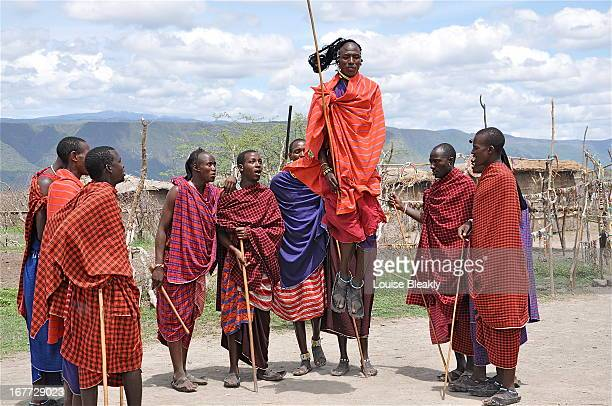 The Masai men do most of the entertaining when performing for visitors. This is the jumping dance. You can see how the men fare as warriors. It is a...
