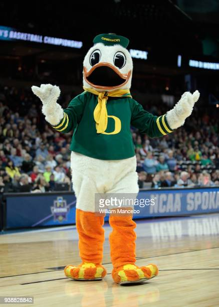 The mascot for the Oregon Ducks performs during the game against the Central Michigan Chippewas in the 2018 NCAA Division 1 Women's Basketball...