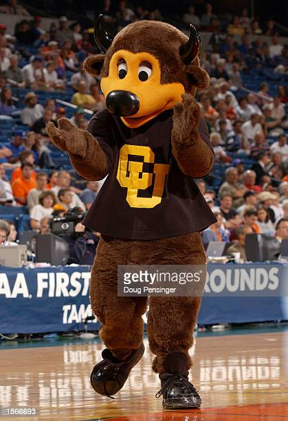 The mascot for the University of Colorado Buffaloes cheers for his team against of the Michigan State Spartans as the Spartans defeated the Buffaloes...