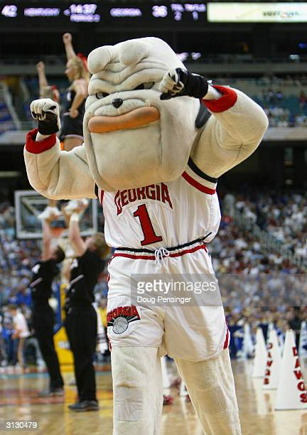 The mascot of the University of Georgia Bulldogs, Hairy Dawg, excites the fans during an intermission in the SEC Men's Basketball Tournament against...
