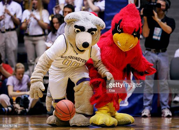 The mascots for the Washington Huskies and the Louisville Cardinals go after a loose ball before the start of the Sweet 16 game of the NCAA Division...