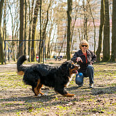 http://www.istockphoto.com/photo/the-mature-50-years-old-attractive-woman-playing-with-the-huge-bernese-mountain-dog-gm678954678-124466641