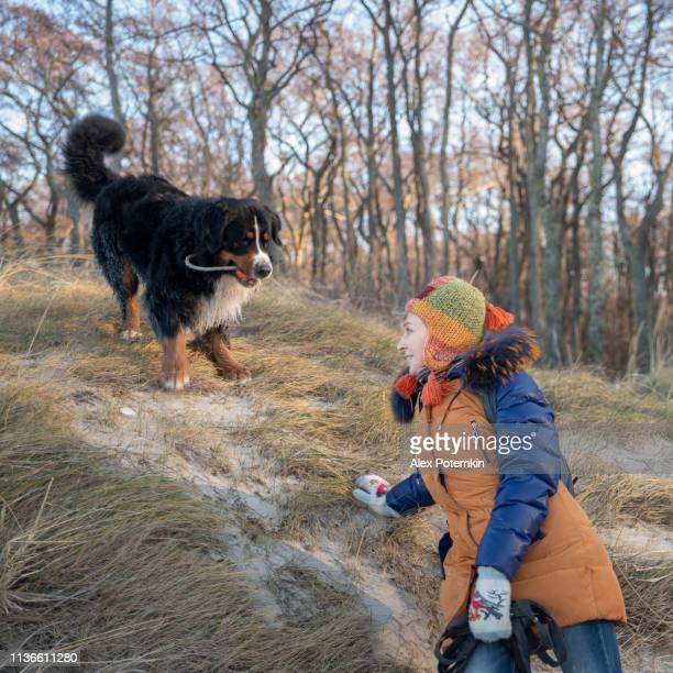 la madura mujer de 55 años de edad jugando con el perro zennenhund en el bosque - 50-59 years and women only fotografías e imágenes de stock