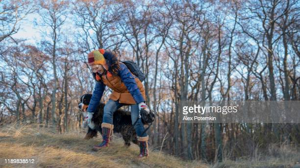 the mature 55 years old woman playing with the zennenhund dog in the forest - 55 59 years stock pictures, royalty-free photos & images