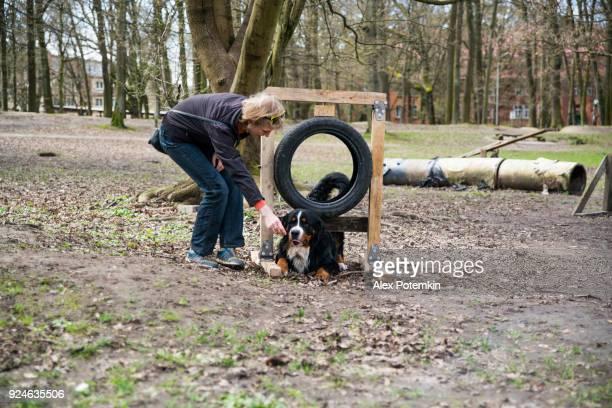 バリアの下にクロールに bernese 山犬を教える成熟した魅力的な女性 - 動物調教師 ストックフォトと画像