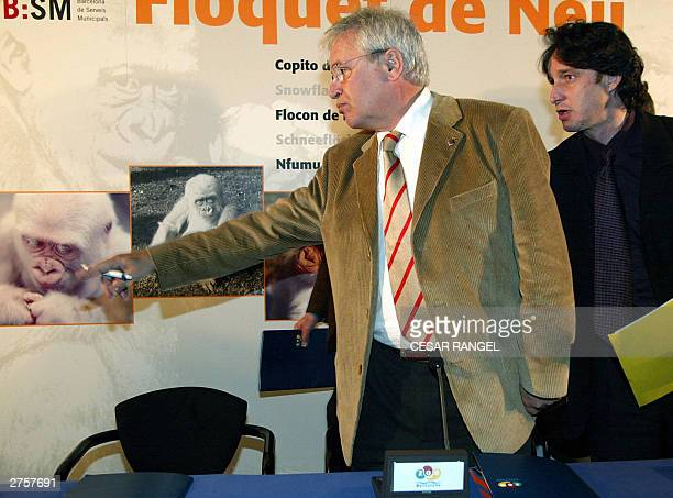 The Mayor of Barcelona Joan Clos and Pere Portabella of Barcelona council show a portrait of Copo de Nieve believed to be the only albino gorilla in...