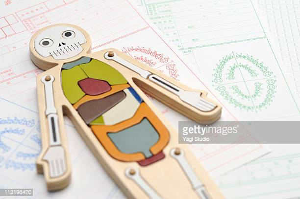 The medical model of the human body and a dental c