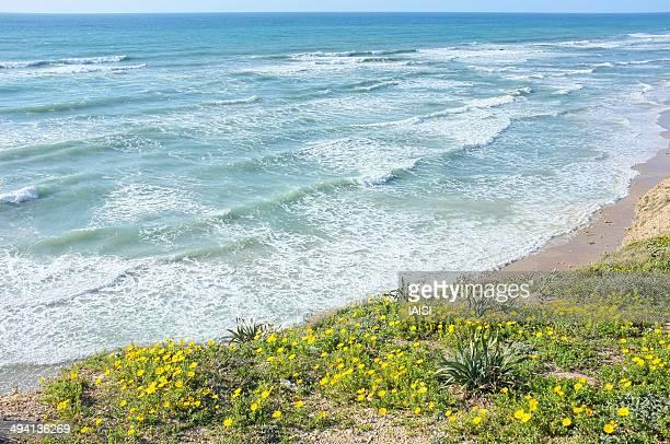 The Mediterranean Coast in Spring