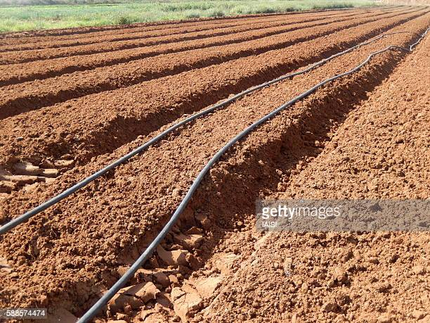 The Mediterranean red soils, a ploughed field