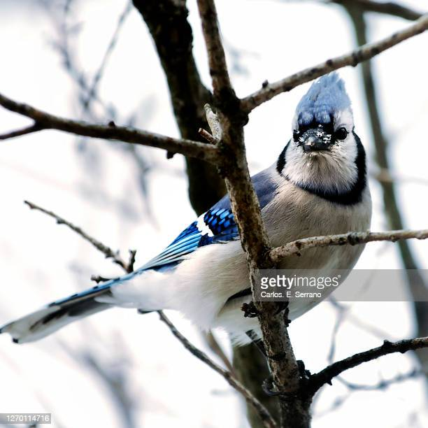 the messenger - yonkers stock pictures, royalty-free photos & images
