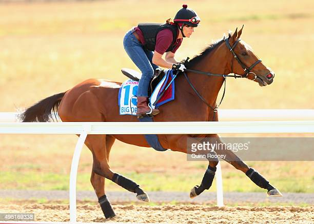 The Michael Bell trained Big Orange works during a trackwork session for international horses competing in the 2015 Melbourne Cup at Werribee...