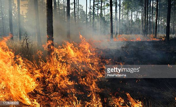 the middle of a forest fire - forest fire stock pictures, royalty-free photos & images