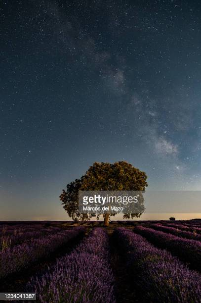 The Milky Way rising on a clear summer night over a lavender field near the village of Brihuega, one of the largest plantations of lavender in Spain...