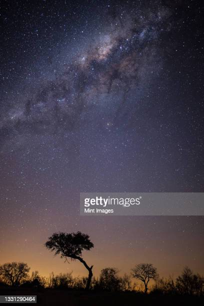the milky way with silhouetted trees in the foreground - south africa stock pictures, royalty-free photos & images