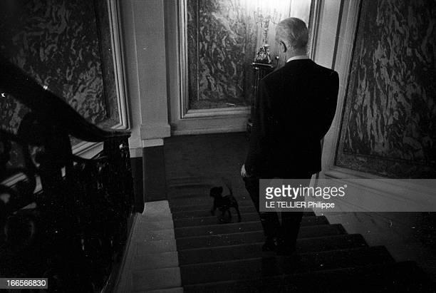 The Minister Of The Interior Roger Frey A Paris Roger FREY ministre de l'Intérieur descendant un escalier accompagné de son chien dans les locaux de...