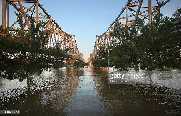 The Mississippi River floods landscaped trees on the Vidalia Riverfront May 18 2011 in Vidalia Louisiana The engorged river is forecast to crest in...