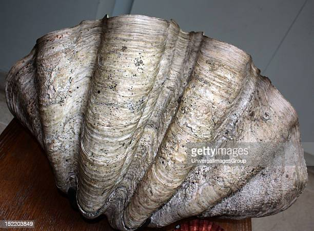 24 Clam Fossil Pictures, Photos & Images - Getty Images