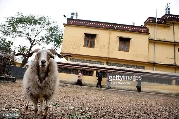 The monastery in Paljor Ling Refugee Camp Nepal is home to at least 20000 Tibetan refugees who often taking up residence in 11 refugee camps spread...
