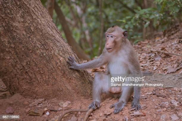 The Monkey Guard