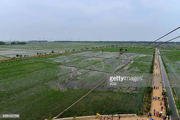 The Monkey King fighting the god Nezha in Havoc in Heaven 3D tanbo art shows at the paddy field on June 09 2016 in Shenyang Liaoning Province of...