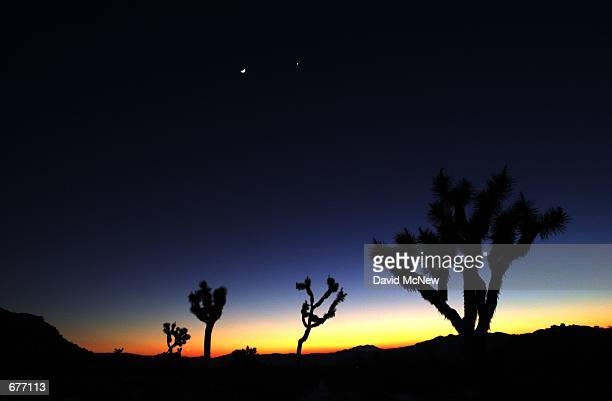 The moon and Venus shine beyond joshua trees under a stormscoured sky in Joshua Tree National Monument January 28 as a cold front moves out of...