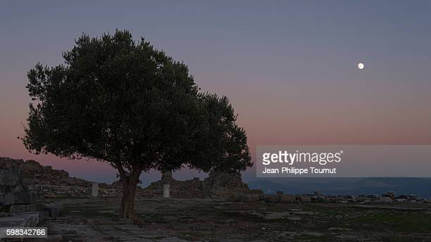 the moon is rising in the twilight sky, the silhouette of a tree stands by the ruins of the sanctuary of athena in the ancient city of pergamom, bergama, aegean turkey - ベルガマ ストックフォトと画像