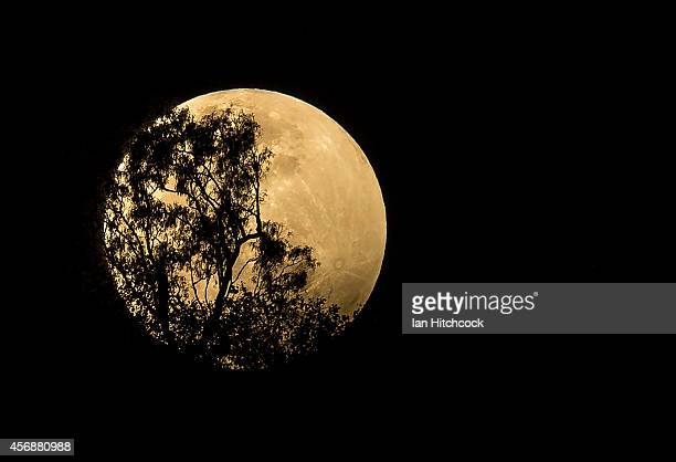 The moon rises over a ridge on Castle Hill at the start of a total lunar eclipse at on October 8 2014 in Townsville Australia The next two eclipses...
