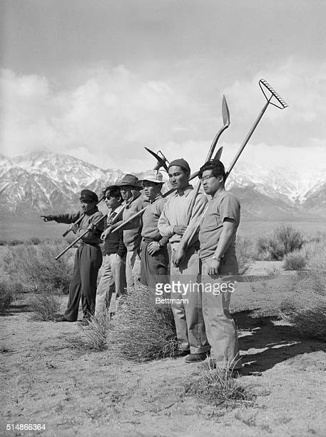 The morning after their arrival these Japanese internees prepare to clear the land near the Manzanar reception center for spring planting | Location...