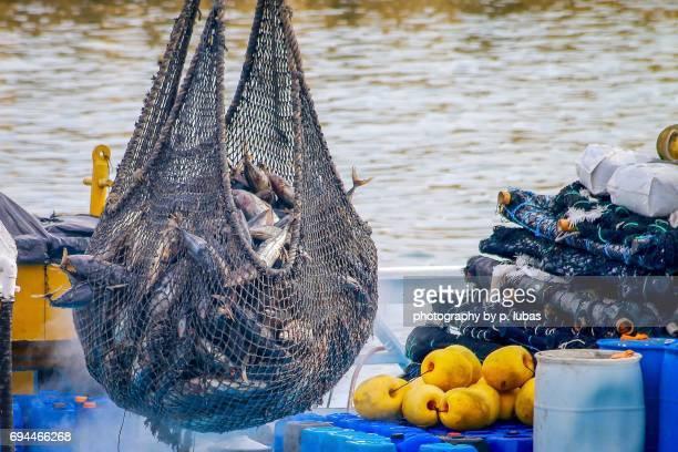 The morning catch of tuna - Manta, Ecuador