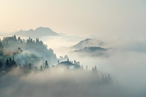 The morning mist 667024182