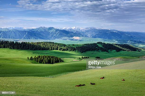 the morning of grassland - tien shan mountains stock pictures, royalty-free photos & images