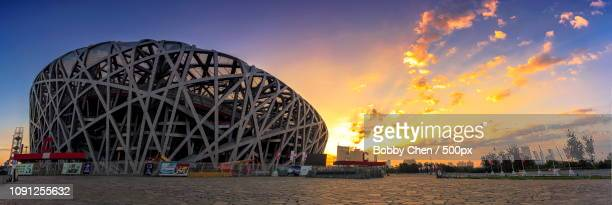 the morning of the bird's nestle - stadio olimpico nazionale foto e immagini stock