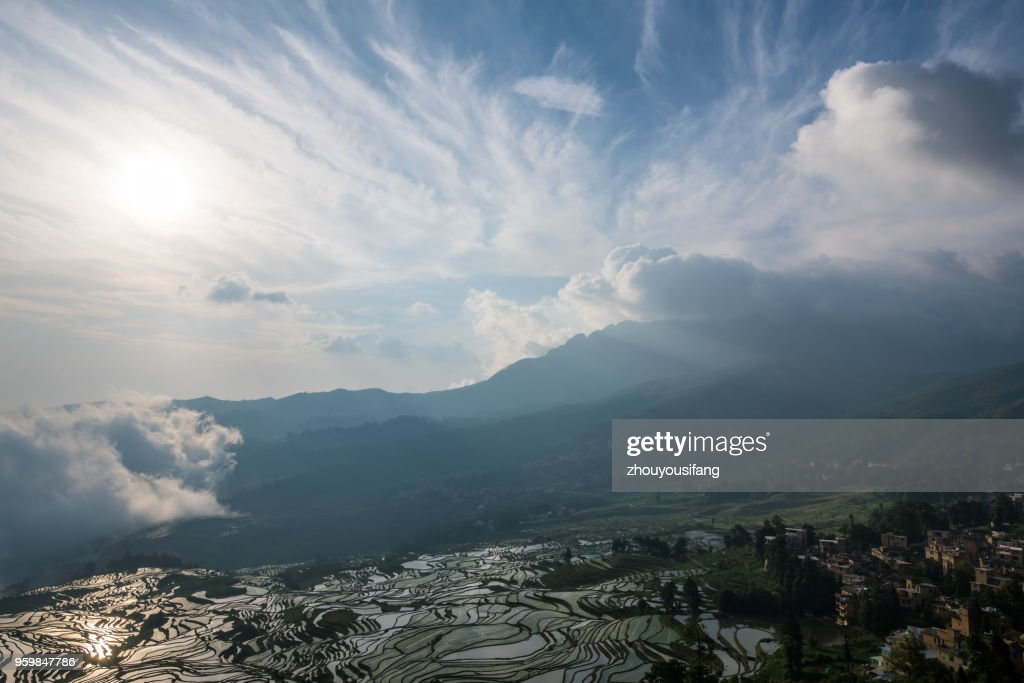 The morning of the terraced fields : Stock Photo