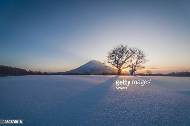 the morning scenery of the famous twin cherry trees and mt yotei in winter, hokkaido, japan. - 深い雪 ストックフォトと画像