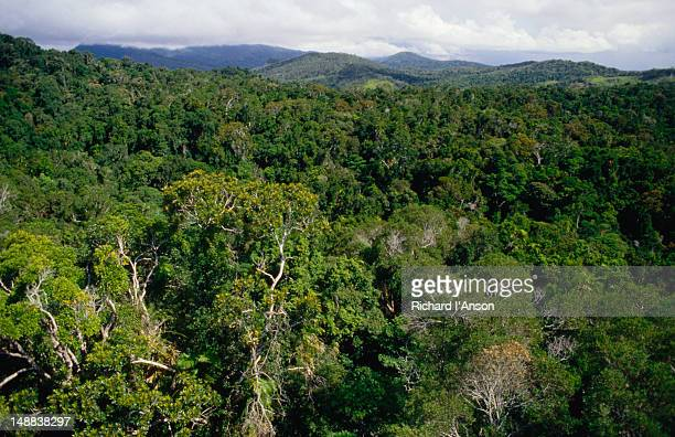 the mountain rainforests on the road between cairns and kuranda in the atherton tablelands. - atherton tableland stock pictures, royalty-free photos & images