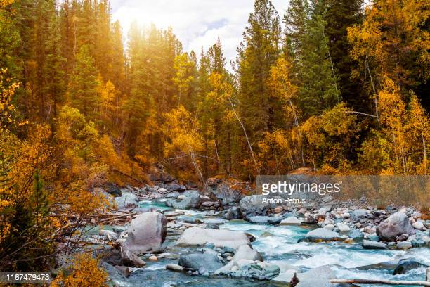 the mountain river in the autumn. canada - quebec stock pictures, royalty-free photos & images